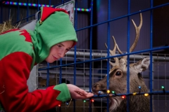 Feed the reindeer