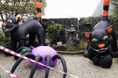 Giant cats and Spider